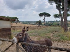 We stayed at I Casali Del Pino, a rural agriturismo just North of Rome. This is Bruno, the donkey