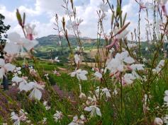 rural Tuscany beauty