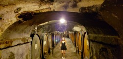 what a cellar! 1,000 years old, like the abbey itself