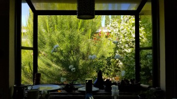 view from the kitchen bay window - the evergreen tree has gotten so huge!
